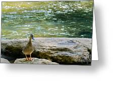 Mother Duck Greeting Card