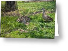 Mother Duck With Nest Greeting Card
