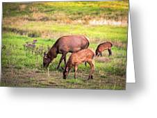 Mother Elk With Her Young Greeting Card