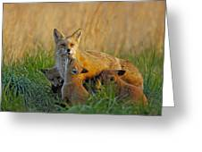 Mother Fox And Kits Greeting Card by William Jobes