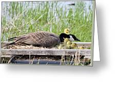 Mother Goose 2 Greeting Card
