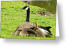 Mother Goose Greeting Card by Bruce Brandli