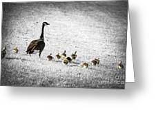 Mother Goose Greeting Card by Elena Elisseeva