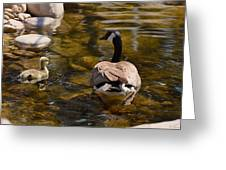 Mother Goose Il Greeting Card