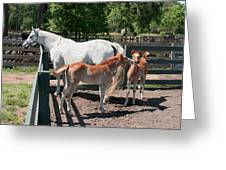 Mother Horse With Twin Colts Greeting Card