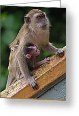 Mother Monkey And Her Baby Greeting Card