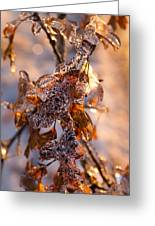 Mother Nature's Christmas Decorations - Golden Oak Leaves Jewels Greeting Card