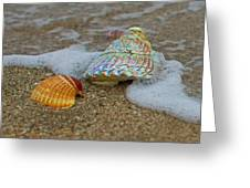 Mother Of Pearl Greeting Card by Robert Bascelli