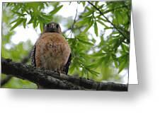Mother Red Shouldered Hawk Greeting Card