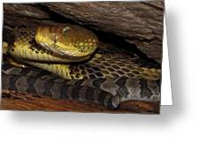 Mother Snake Greeting Card