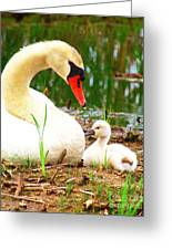 Mother Swan And Baby Greeting Card
