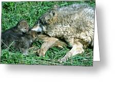 Mother Wolf Nuzzles Cubs Greeting Card