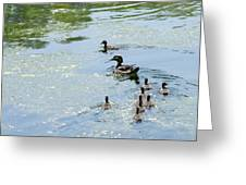 Mother Wood Duck Greeting Card