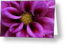 Mothers Flowers Greeting Card