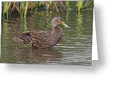 Mottled Duck Drake Greeting Card