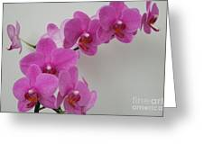 Mottled Orchid 1 Greeting Card