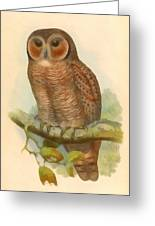 Mottled Wood Owl Greeting Card