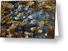 Mound Of Mussels Greeting Card by Sarah Crites