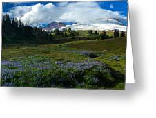 Mount Baker Lupine Meadows Greeting Card