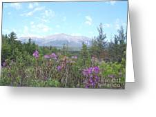 Mount Katahdin And Wild Flowers Greeting Card