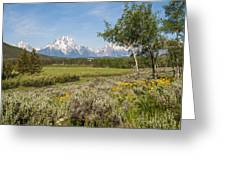 Mount Moran View Greeting Card by Brian Harig