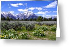 Mount Moran Wildflowers Greeting Card by Brian Harig