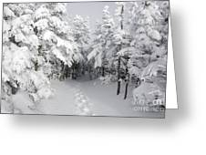 Mount Osceola Trail - White Mountains New Hampshire Greeting Card