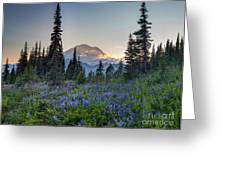 Mount Rainer Flower Fields Greeting Card