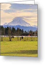 Mount Rainier And Grazing Horses Greeting Card