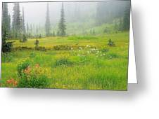Mount Revelstoke National Park British Columbia Canada Greeting Card