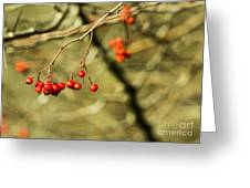 Mountain Ash Greeting Card