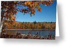Mountain Ash In Autumn Greeting Card