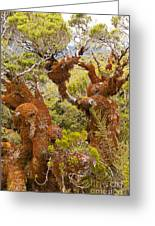 Mountain Beech Rain Forest In Fjordland Np Nz Greeting Card