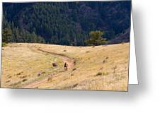 Mountain Biker Greeting Card