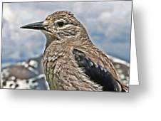 Mountain Bird Greeting Card