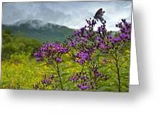 Mountain Butterfly  Greeting Card