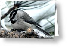 Mountain Chickadee During A Light Snow Greeting Card