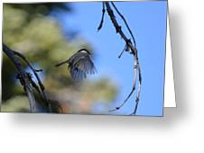 Mountain Chickadee Greeting Card
