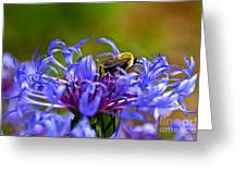 Mountain Cornflower And Bumble Bee Greeting Card by Byron Varvarigos