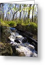 Mountain Creek In Spring Greeting Card