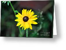 Mountain Daisy Yellow Greeting Card