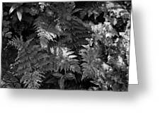 Mountain Ferns 1 Greeting Card by Roger Snyder