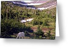 Mountain Goat 5 Greeting Card