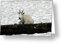 Mountain Goat Greeting Card by David Armstrong