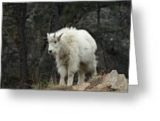 Mountain Goat Kid Greeting Card