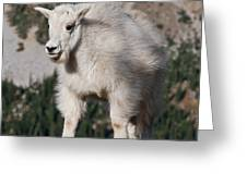Mountain Goat Kid Standing On A Boulder Greeting Card