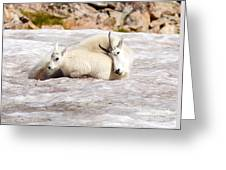 Mountain Goat Mother And Baby Greeting Card