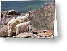 Mountain Goat Nanny And Kid Enloying The View On Mount Evans Greeting Card