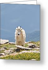 Mountain Goat Portrait Greeting Card