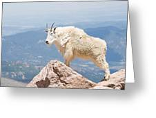 Mountain Goat Up High Greeting Card